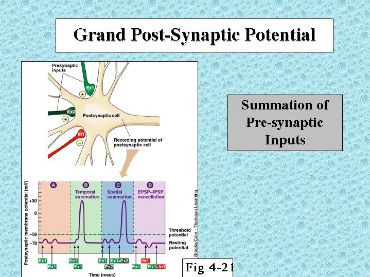 SYNAPTIC POTENTIAL EBOOK