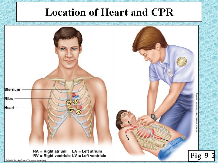Location Of Heart And Cpr