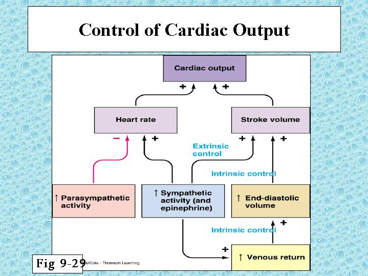 cardiac output Cardiac output is the amount of blood the heart pumps in 1 minute, and it is dependent on the heart rate, contractility, preload, and afterload.